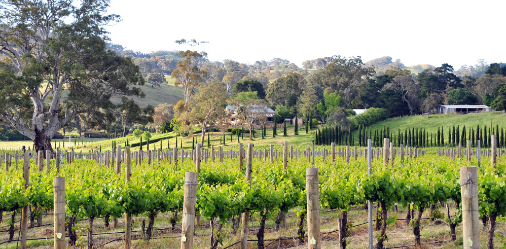 springtime in the Adelaide Hills